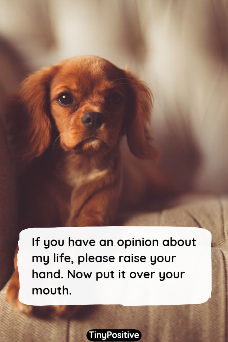 funny quote about life 76 Short Funny Quotes to Make You Laugh Funny Sayings and Quotations