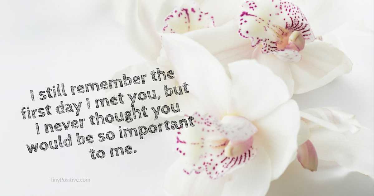60 Sad Quotes Life Quotes About love