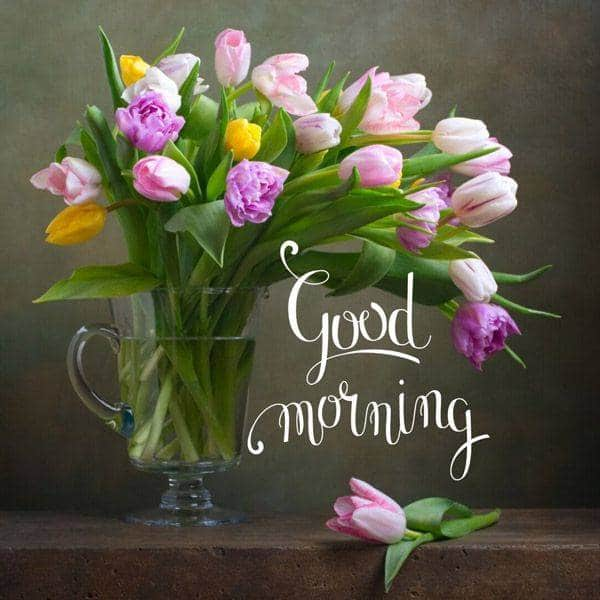 good morning meme | cute good morning music images, good morning funny, funny happy morning images