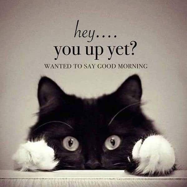 funny good morning images and quotes | good morning meme
