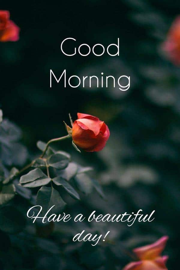 good morning pictures for him | funny good morning, good morning signs pictures, beautiful day meme
