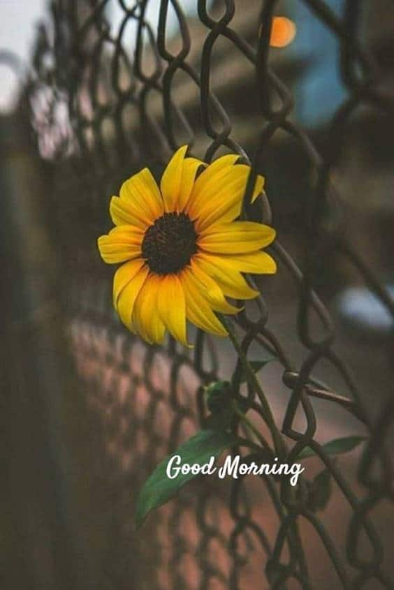 38 Motivational Good Morning Quotes with Beautiful Images | positive morning quotes, good day quotes, extraordinary good morning quotes