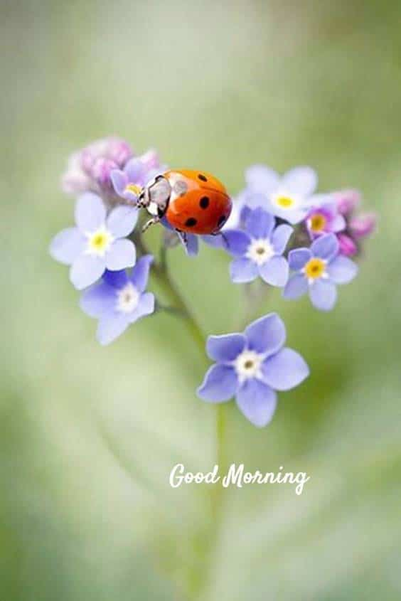 38 Motivational Good Morning Quotes with Beautiful Images | good morning successful day, good morning happiness, happy morning quotes