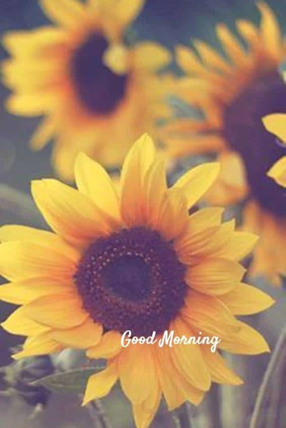 38 Motivational Good Morning Quotes with Beautiful Images | good morning positive quotes, good morning inspirational quotes, good morning motivation quotes