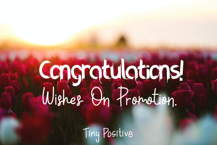 145 Congratulations Wishes On Promotion | job promotion success congratulations, job promotion message job promotion congratulations, well deserved congratulations job promotion