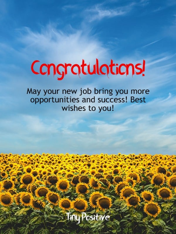 165 Best Wishes for New Job – Congratulations Messages Quotes Messages | best wishes for having first job, best wishes for new job to husband, wishes for new job to wife