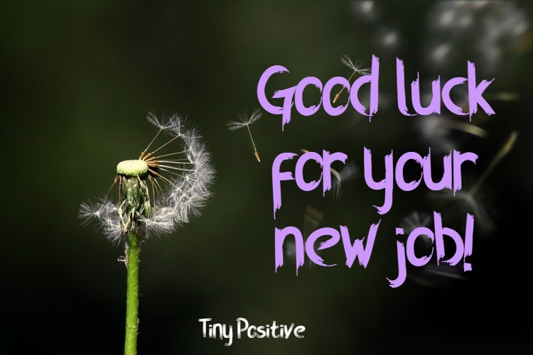 165 Best Wishes for New Job – Congratulations Messages Quotes Messages | best wishes for new job to girlfriend, funny new job wishes, inspiring new job messages