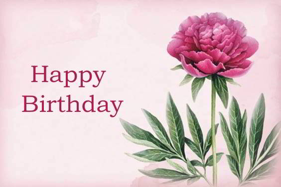 birthday rose flowers