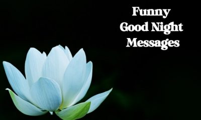 Funny Good Night Images with Wishes Greetings Pictures
