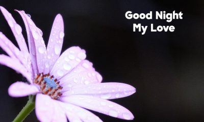 Good Night My Love Text Messages