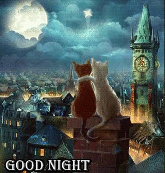 funny good night photos