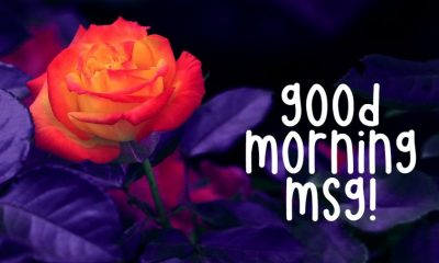 Good Morning Msg With Pictures Images And Quotes About Motivation